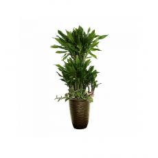 관엽식물-황금죽-103