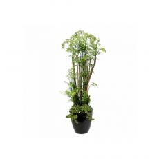 관엽식물-폴리샤스-89