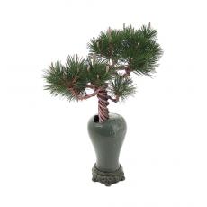 분재-소나무-21